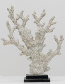 Corallo Poly Ramif. H34X29X10